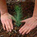 ۱۵ اسفند روز درختکاری